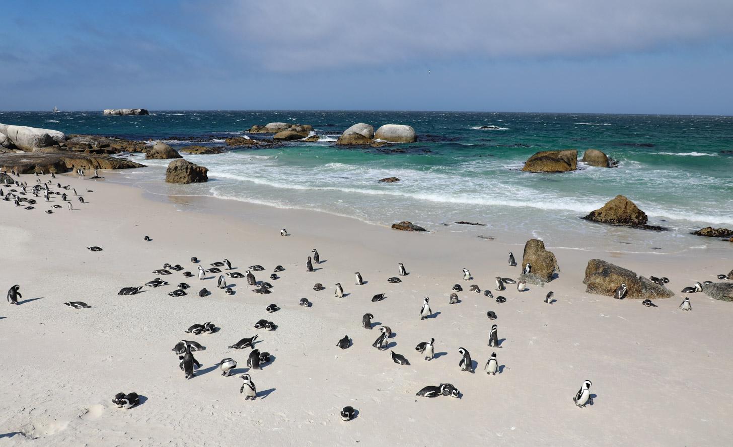 De pinguïnkolonie op Boulders Beach